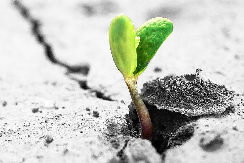 Existenzgründungsberatung, Startup Consulting für E-Business & E-Commerce Geschäftsmodelle in der Early Stage Gründungsphase sowie in der Later Stage Wachstumsphase